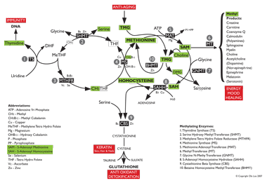 Click to view a large image diagram of the methylation process